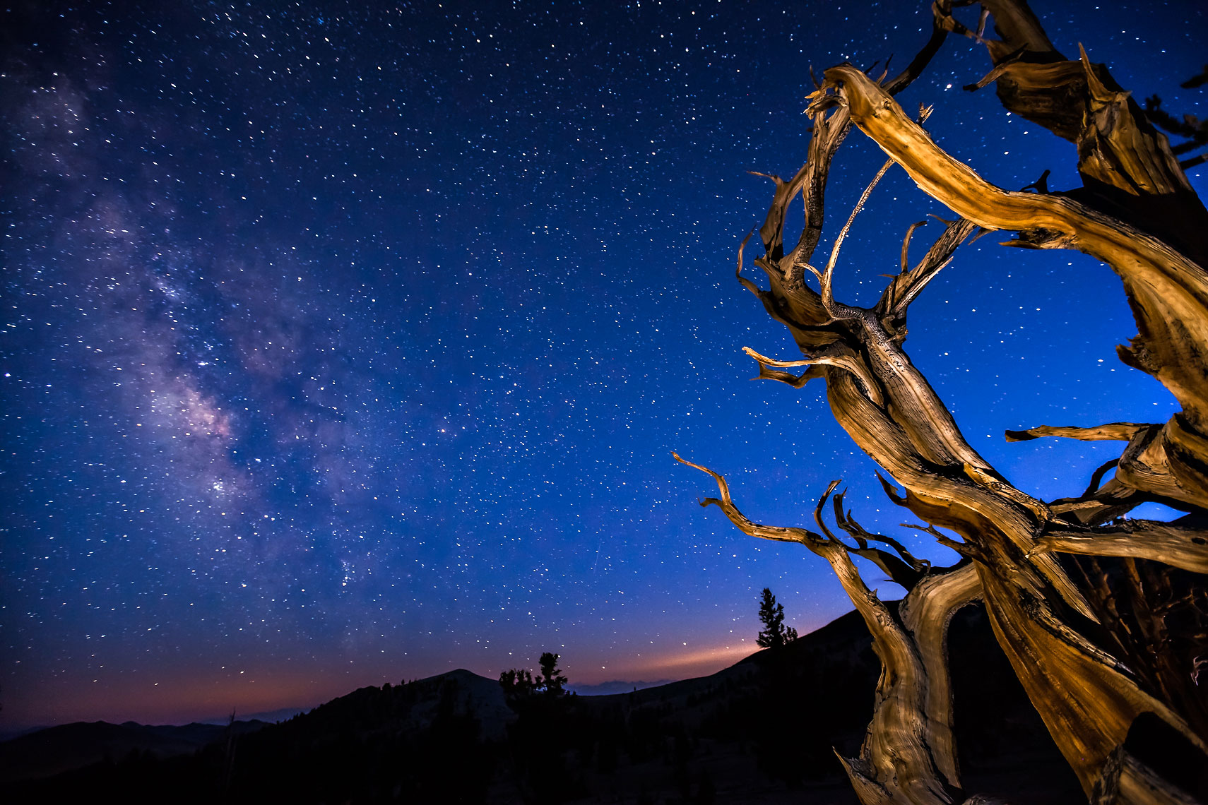 Bristlecone Blue Milky Way
