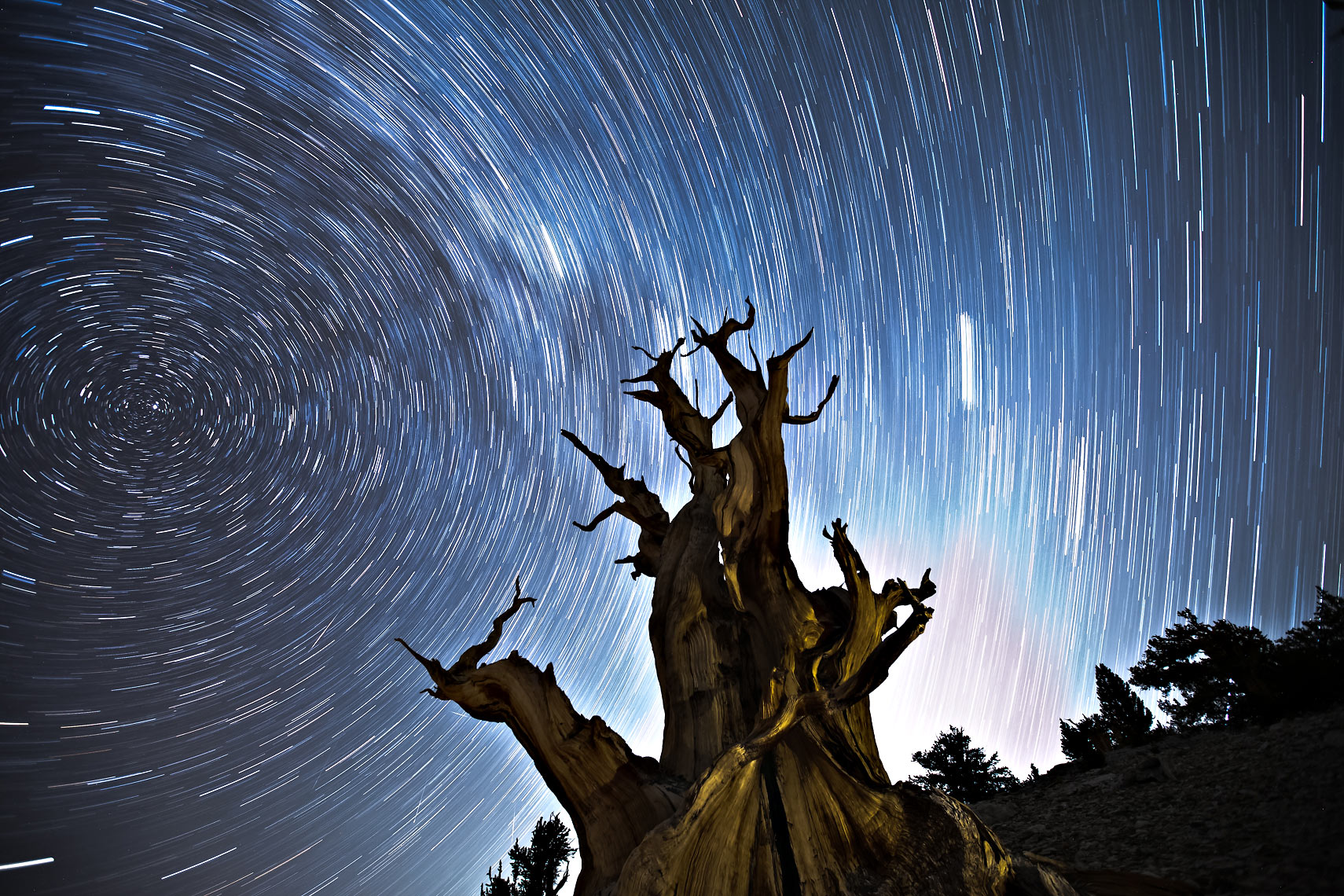 Bristlecone Pine Star Trails