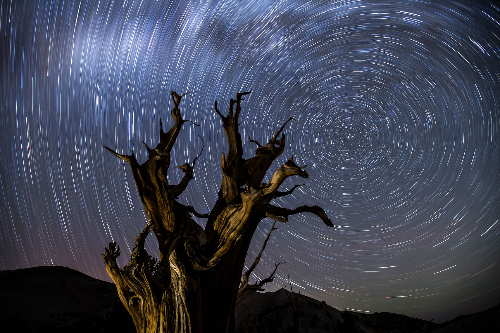 Bristlecone Star Trails