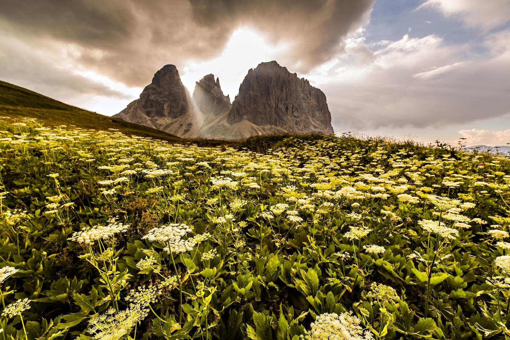 Dolomiti Flowers Storm Light