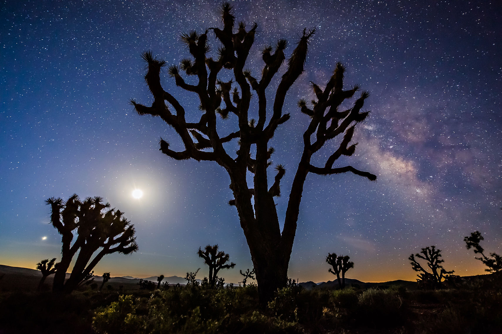 Joshua Tree Milky Way Moon