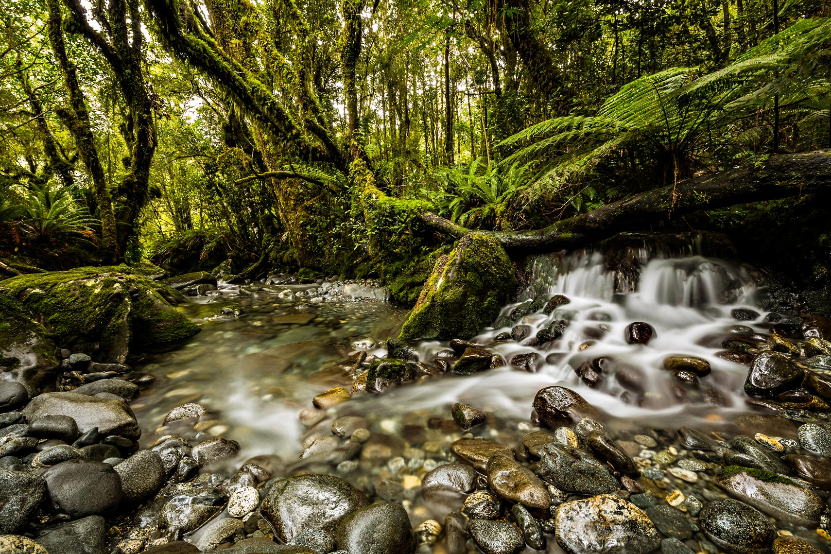 New Zealand Rainforest Creek