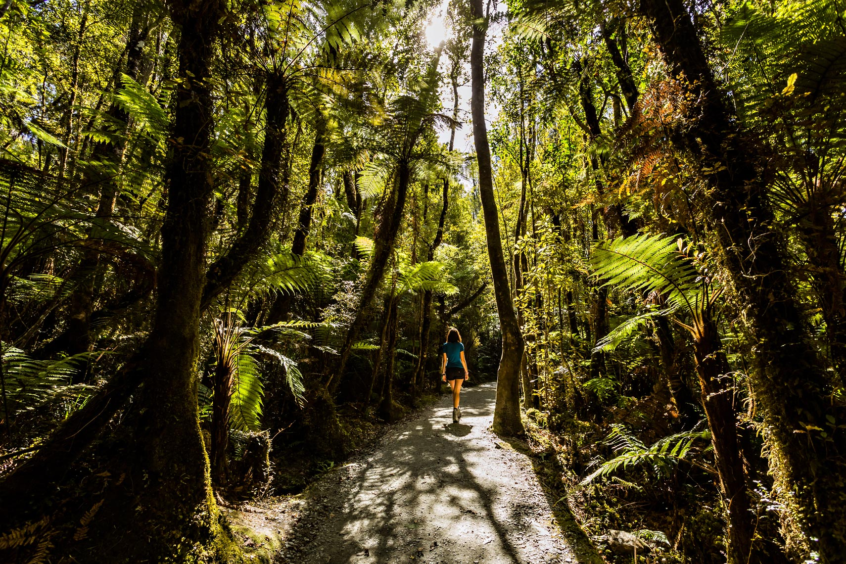 New Zealand Rainforest Hiker