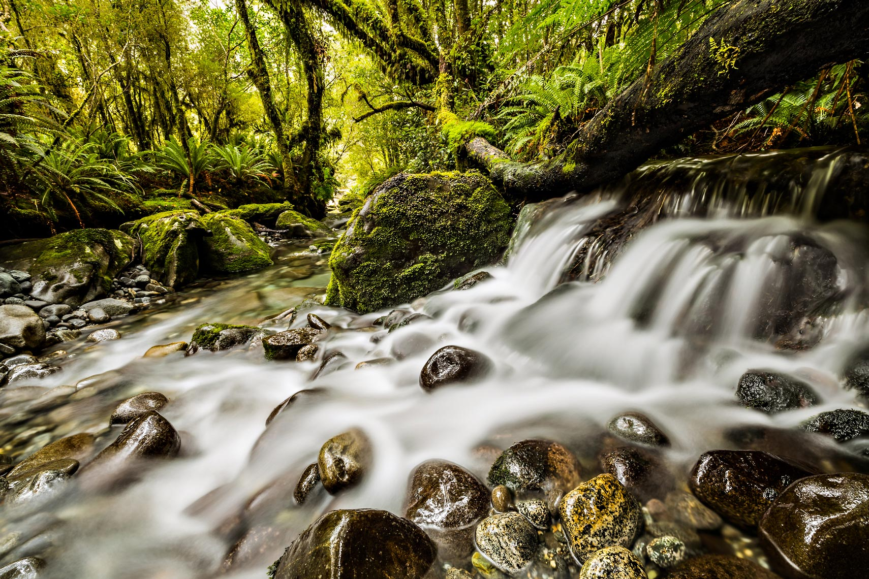 New Zealand Rainforest Waterfall