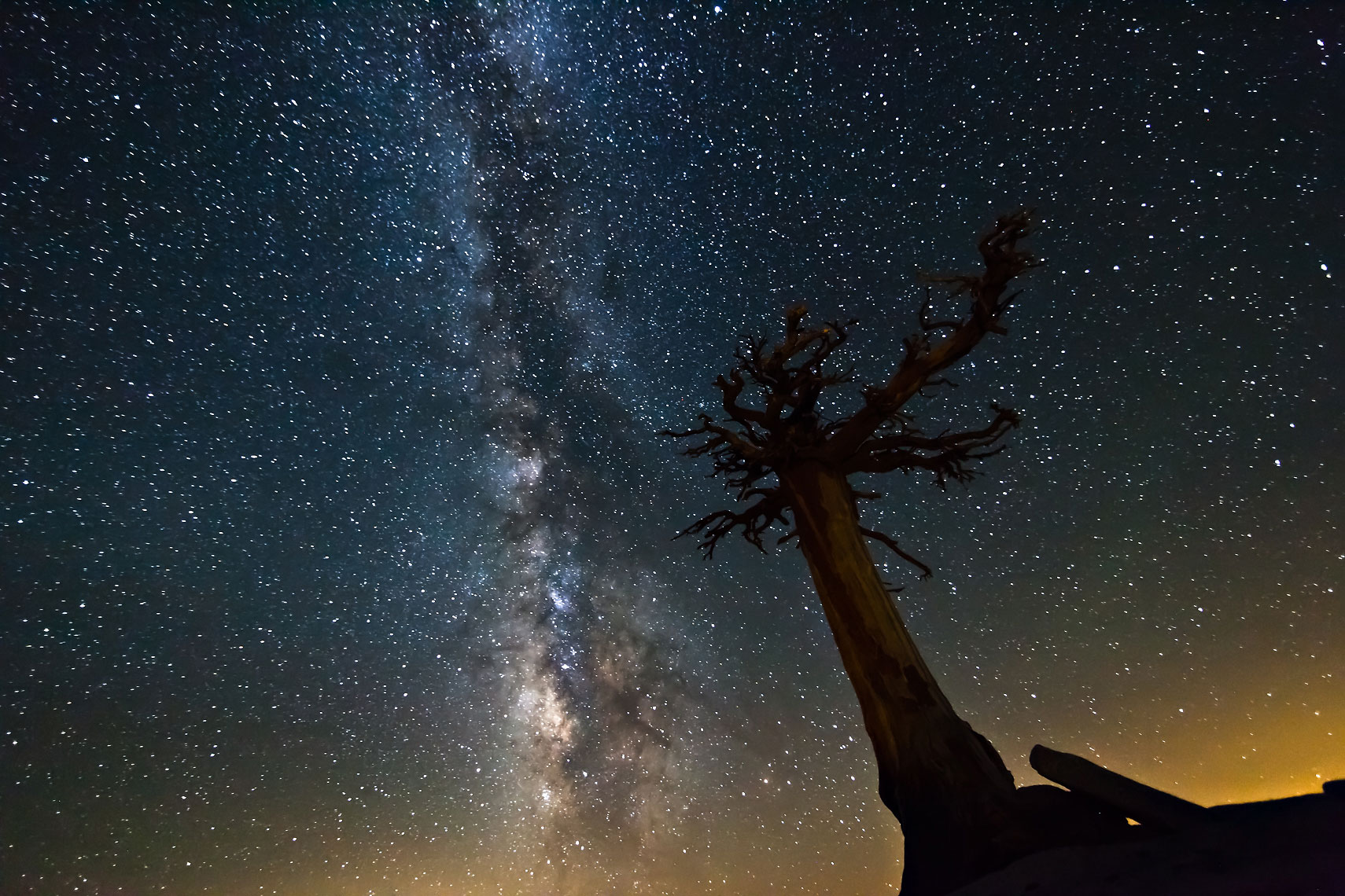 Olmsted Tree Milky Way